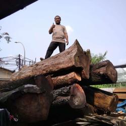 Acasia Logs