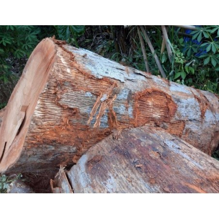 Kembang Kenari Logs